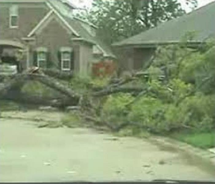 Tree fallen on a house damaging the roof