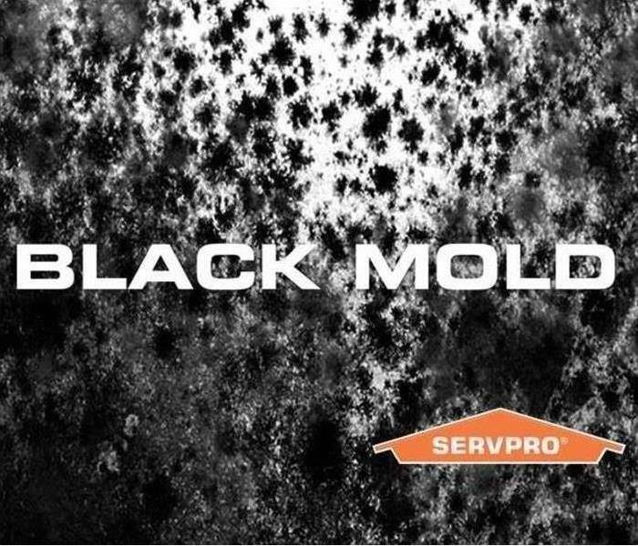 Picture of Black Mold on a Wall
