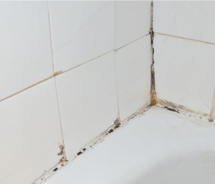 Moldy shower in Tampa, Florida